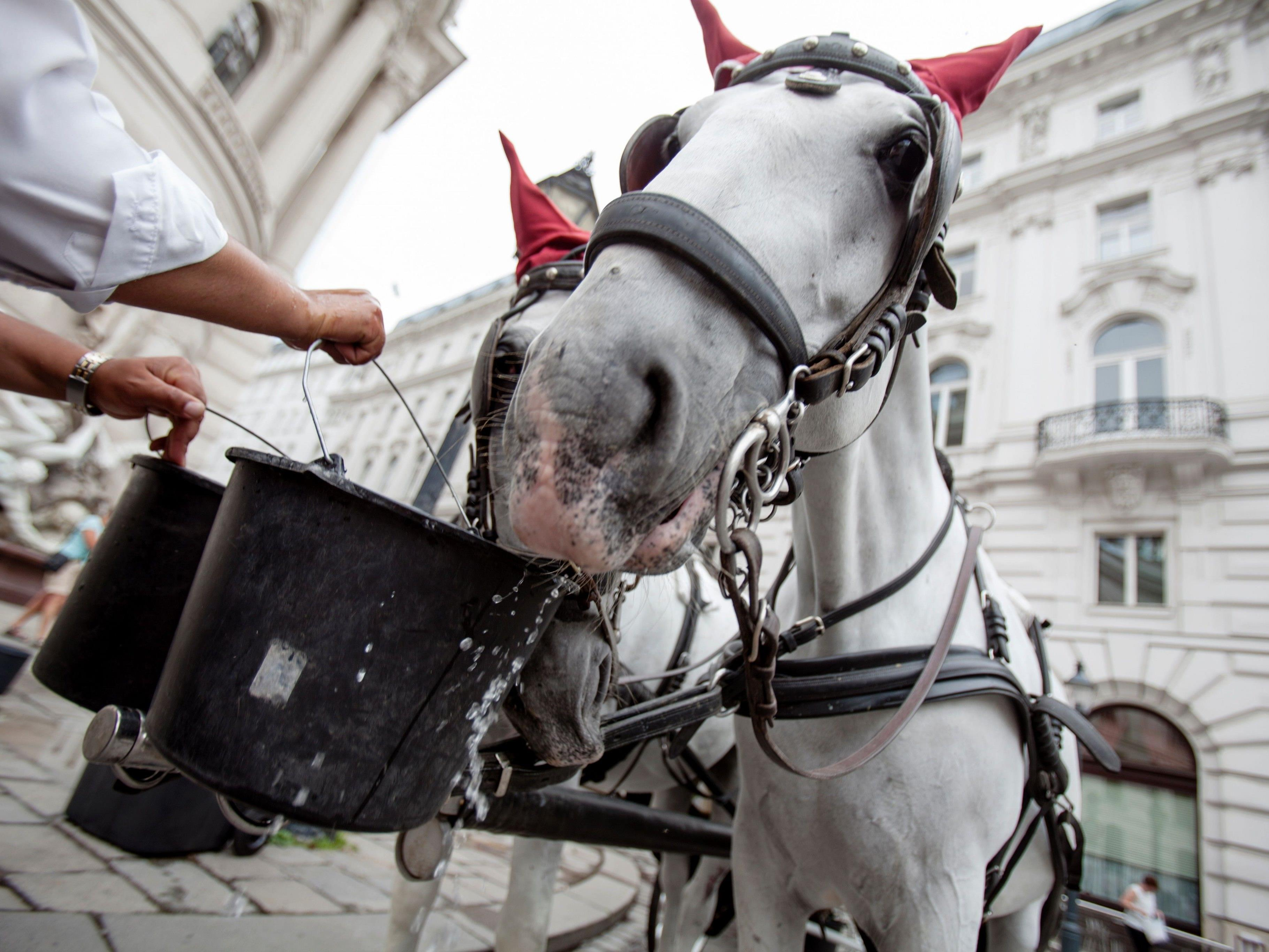Wiens Fiaker-Pferde bekamen am Donnerstag nicht hitzefrei.