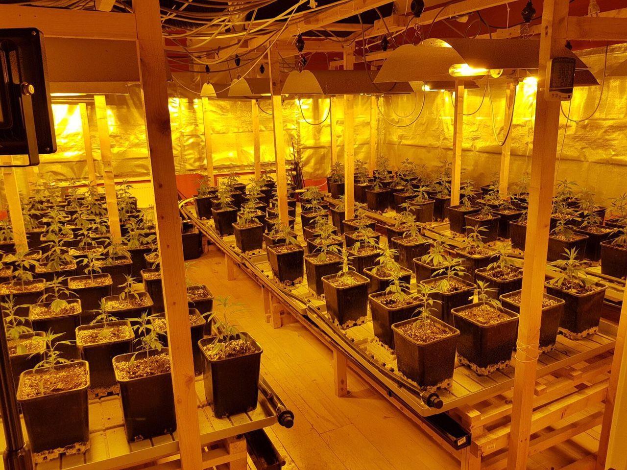 Die ausgehobene Indoor-Plantage im Bezirk Baden