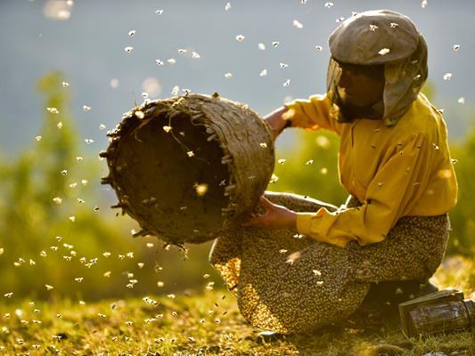 """Film """"Honeyland"""""""