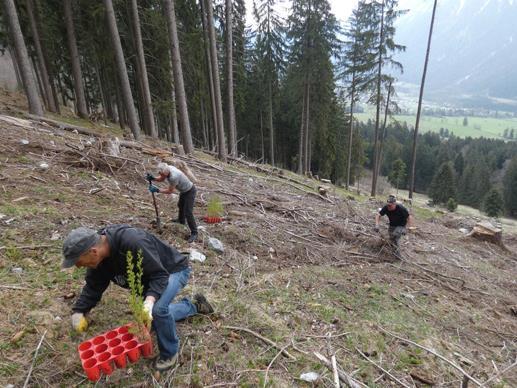 Bei der Aufforstungsaktion in der Brazer Allmein wurden von den Teilnehmenden 450 Gehölze angepflanzt.