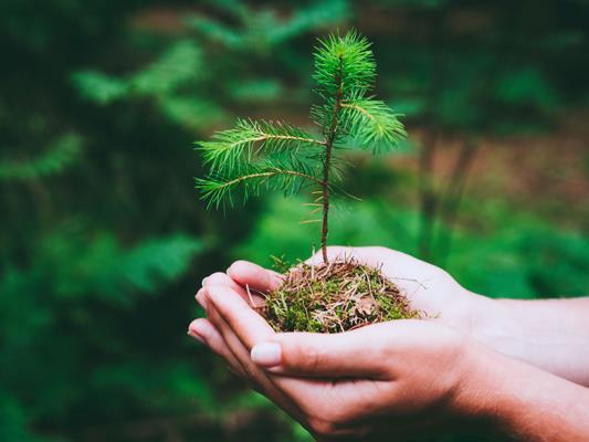 Noch sind Restplätze für die Baumpflanzaktion am Donnerstag, 22. April frei.