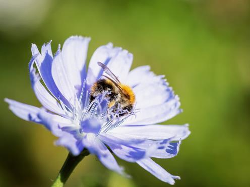 """Mit der Baupflanzaktion am 22. April startet die Veranstaltungsreihe """"Umwelt im Gespräch"""" in den Frühling."""